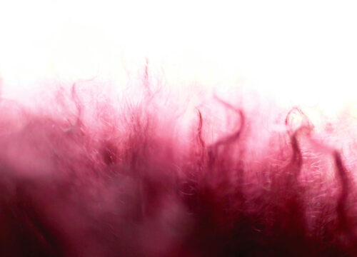Close up of microfibres
