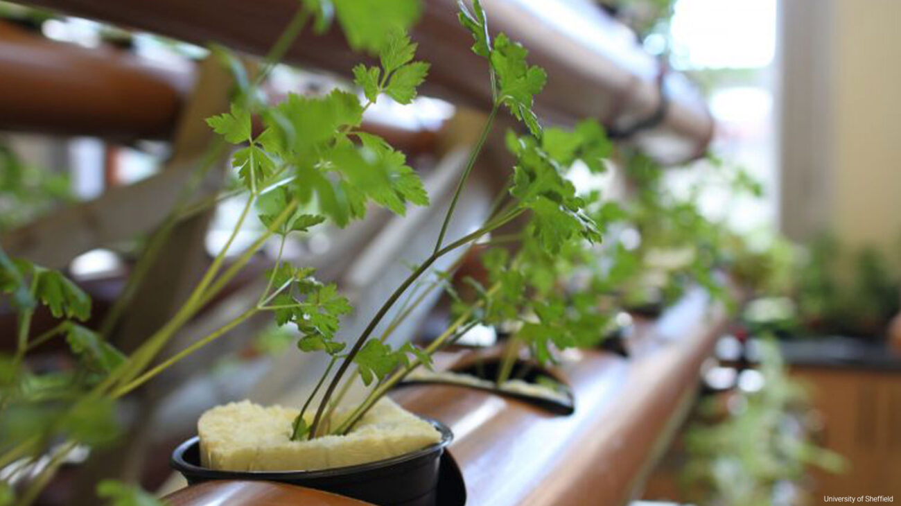 Herbs growing in pots with mattress of cut linings