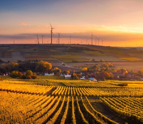 Agricultural sunset with wind farm on the horizon