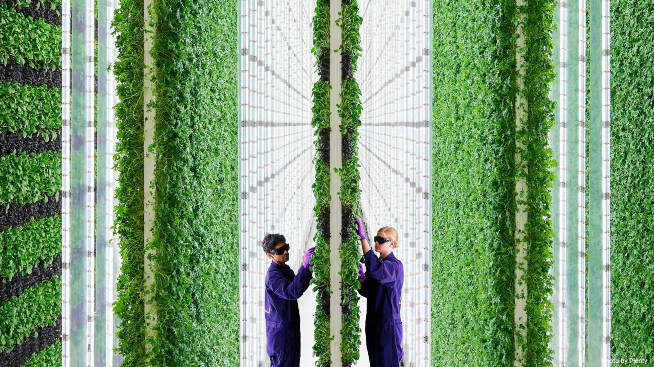 Two workers in a vertical farm