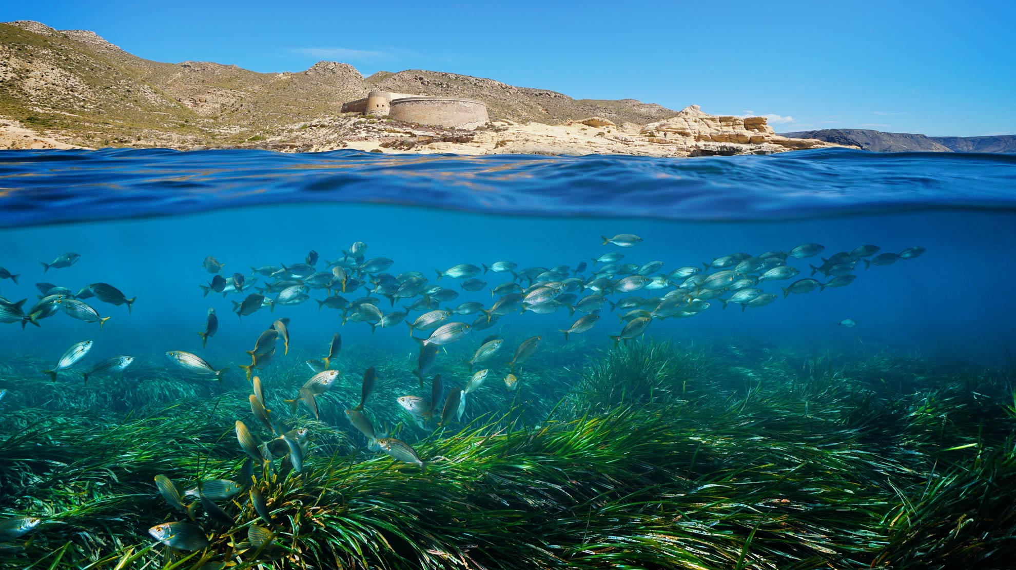Seagrass helps tidy up plastic from Mediterranean Sea