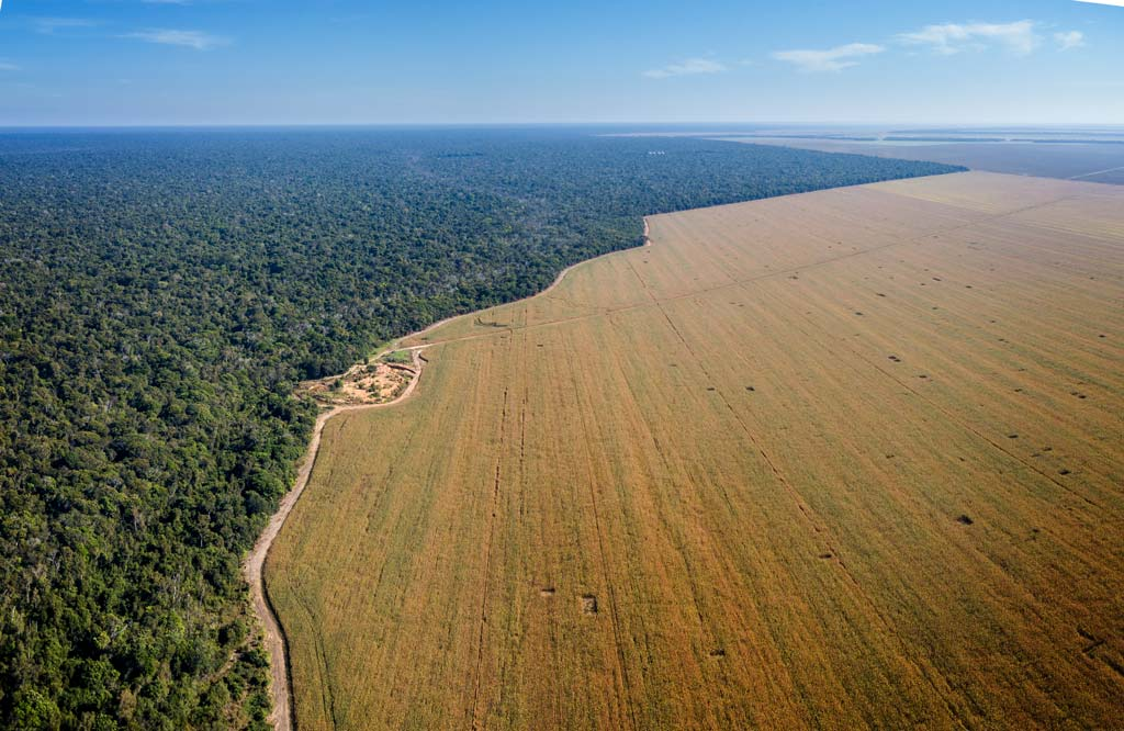 Aerial drone view of the Xingu Indigenous Park territory border and large soybean farms in the Amazon rainforest, Brazil.