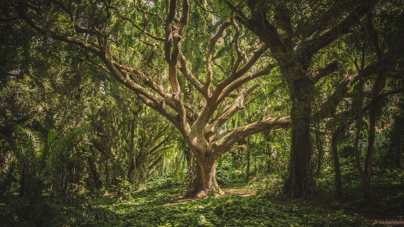 Tree surrounded by greenery